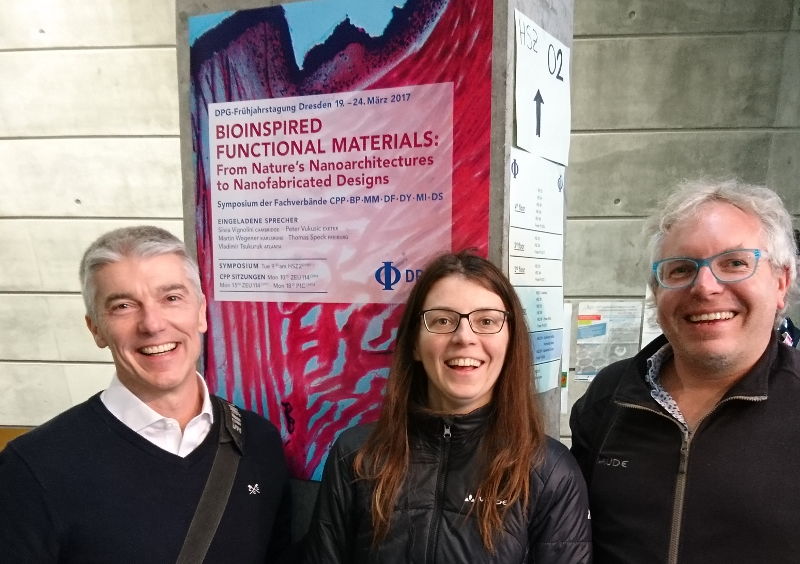 web_picture_bionspired_functional_materials_DPG_meeting_2017